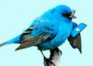 توییتر :بهترین زمان برای توییت کردن چه موقع است ؟